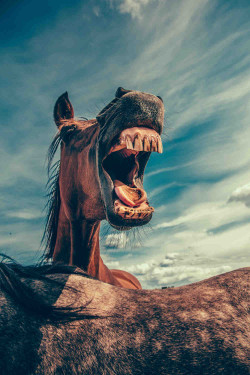 laughing_horse2